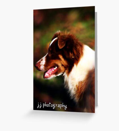 Josey Australian Shepherd Greeting Card