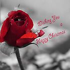 Winter Rose Christmas Card by Martina Fagan