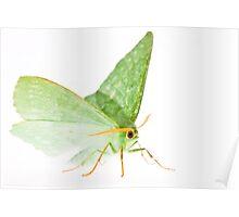 Green&White Poster