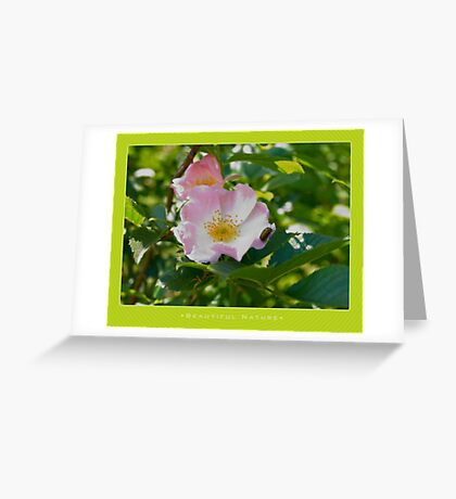 Macro: Beautiful  Nature - 1 Greeting Card