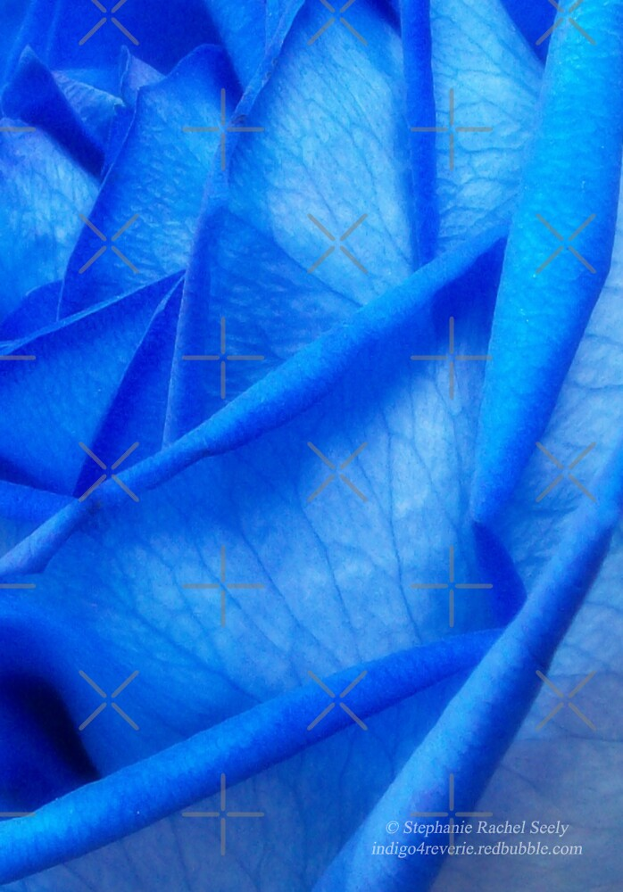 Wrapped In Blue by Stephanie Rachel Seely