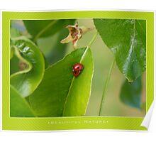 Macro: Beautiful  Nature - 2 Poster
