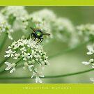 Macro: Beautiful  Nature - 3 by houk