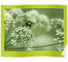 Macro: Beautiful  Nature - 3 Poster