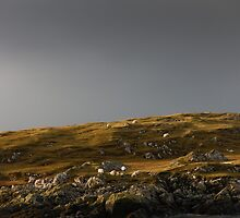 The Sheep of Harris by Neil Buchan-Grant