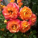 Bunch of roses by AmandaWitt