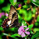 Butterfly At Dinner by bygeorge
