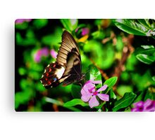 Butterfly At Dinner Canvas Print