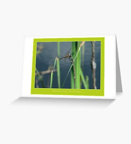 Macro: Beautiful  Nature - 5 Greeting Card