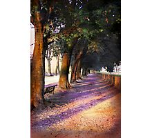 Shadows & Tall Trees Photographic Print