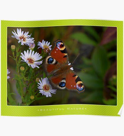 Macro: Beautiful  Nature - 6 Poster