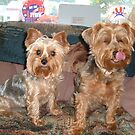 my yorkies by arlenesikorski