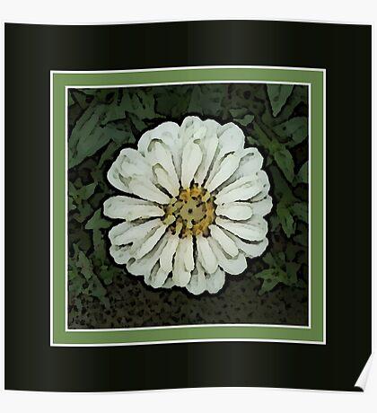 Cream White Zinnia Flower Artwork Poster