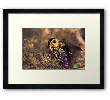 Vibrant Wings Framed Print