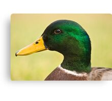 Just Ducky! Canvas Print