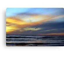The Pelican  Canvas Print