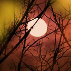 colorful moon by ANNABEL   S. ALENTON