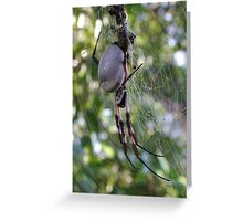 Female Golden Orb Weaver, heavy with eggs Greeting Card