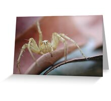 Lynx Spider Greeting Card