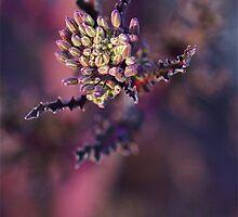 Broccoli Flower by Themossgirl