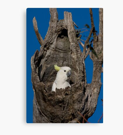 Jack in the Box Canvas Print