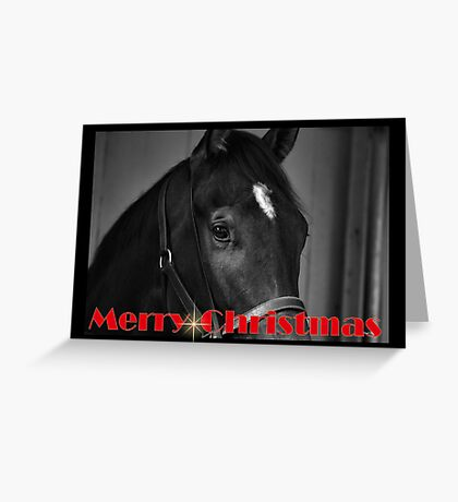 HORSE BLACK & WHITE CHRISTMAS CARD - MERRY CHRISTMAS Greeting Card