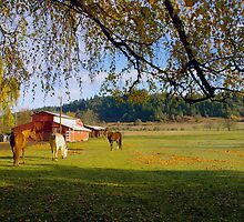 Oregon morning - 3 horses and a barn by Allan  Erickson
