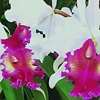 orchids delight by ANNABEL   S. ALENTON