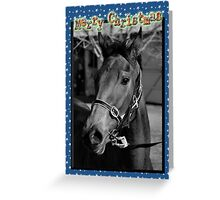 HORSE CHRISTMAS CARD - BLACK & WHITE HORSE - MERRY CHRISTMAS Greeting Card
