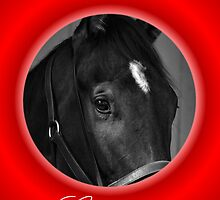 HORSE FACE BLACK & WHITE CHRISTMAS CARD - CHRISTMAS GREETINGS by Cheryl Hall