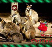 MERRY CHRISTMAS -BUNCH - WALLABY - KANGAROO by Cheryl Hall