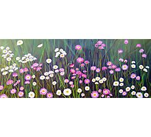 Wildflowers of Western Australia - Paper Daisies - Acrylic on canvas Photographic Print
