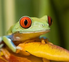 Those big  red eyes by Angi Wallace