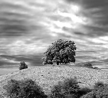 Crookbarrow Tree by David Benton