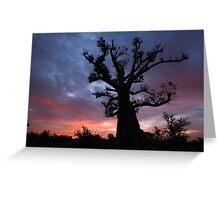 Baobab Tree at Sunrise Greeting Card
