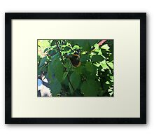 Ragged Butterfly Framed Print
