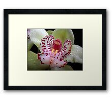 Orchid. Framed Print