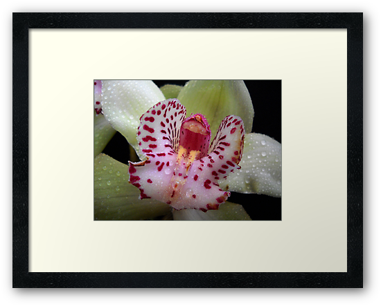 Orchid. by Vitta