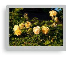 Beautiful  Nature: Roses - 6 Canvas Print