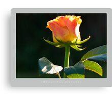 Beautiful  Nature: Roses - 9 Canvas Print