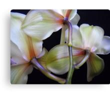 Brilliant flowers. Canvas Print