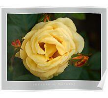 Beautiful  Nature: Roses - 10 Poster