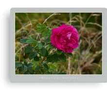 Beautiful  Nature: Roses - 12 Canvas Print