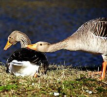 Put your head on my shoulder by Alan Mattison