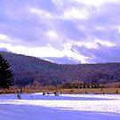 Quoggy Jo Mountain Range by Brenda Dow