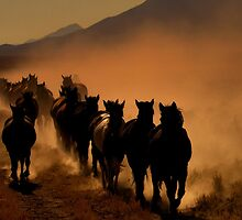 The Long Dusty Trail by Jeanne  Nations