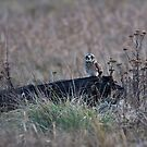 Lonely Hunter by David Friederich