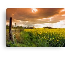 Cinamon Sky Over the Yellow Field Canvas Print