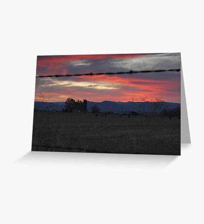 Cows - Sunset Greeting Card