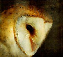 Barn Owl by Lois  Bryan
